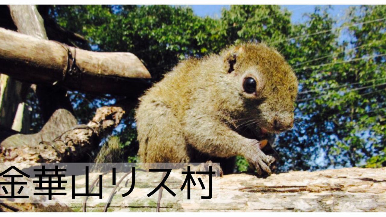 園 岐阜 リス ぎふ金華山リス村:日本初のリス園